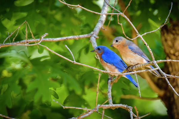 Wall Art - Photograph - Blue Bird Couple by Oscar Gutierrez
