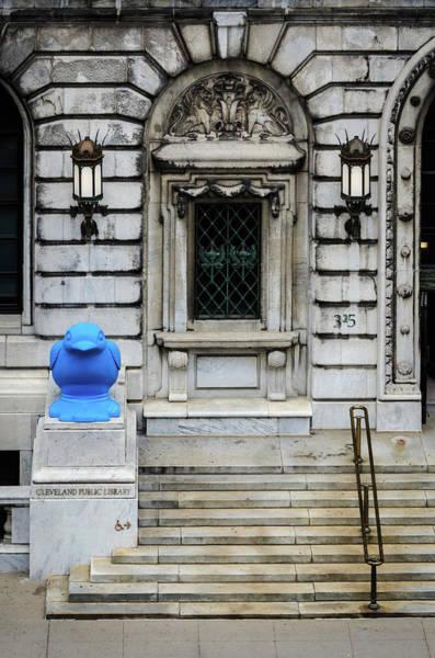 Photograph - Blue Bird by Stewart Helberg