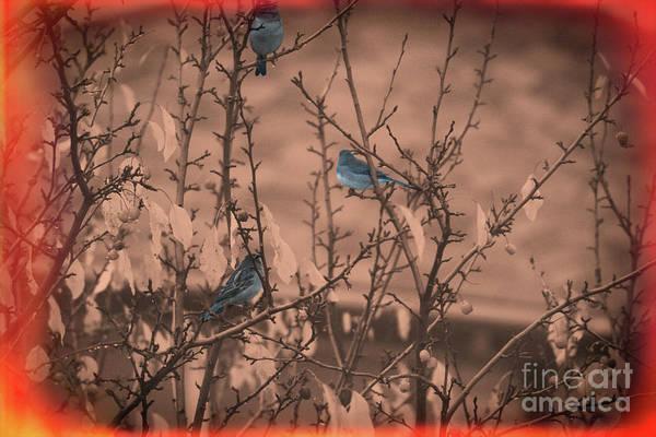 Digital Art - Blue Birdios by Donna L Munro