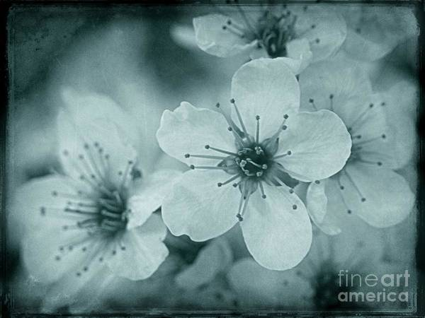 Photograph - Blue Blossoms by Patricia Strand