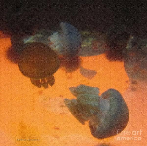 Photograph - Blue Blubber Jellyfish by Kathie Chicoine