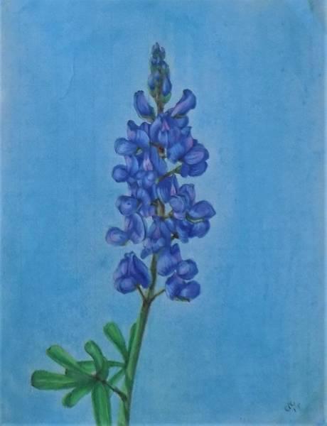 Drawing - Blue Bonnet by Chuck Caputo