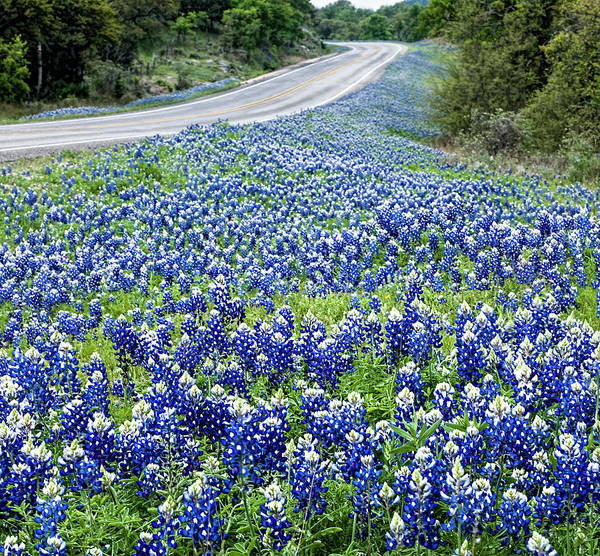 Photograph - Blue Bonnets Along Texas Highway by Brian Kinney
