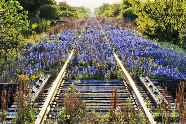 Wall Art - Photograph - Blue Bonnets On Railroad Tracks by Jeremy Woodhouse