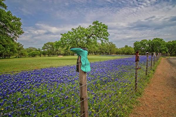 Photograph - Blue Boots And Bluebonnets On The Willow City Loop by Lynn Bauer