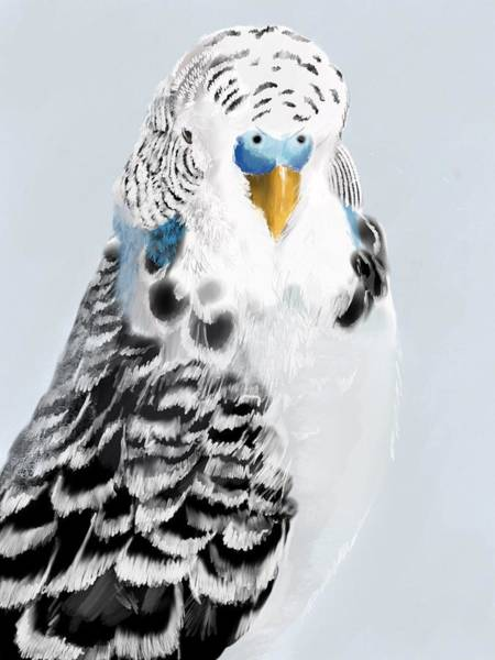 Parrot Digital Art - Blue Budgie by KC Gillies