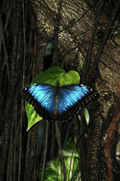 Wall Art - Photograph - Blue Butterfly by Alynne Landers