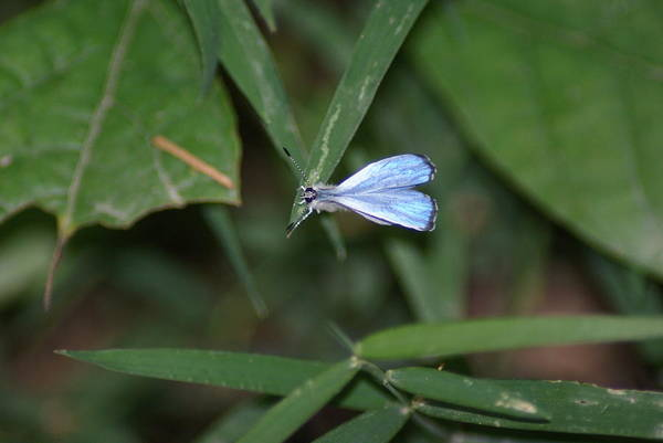 Wall Art - Photograph - Blue Butterfly by Heather Green