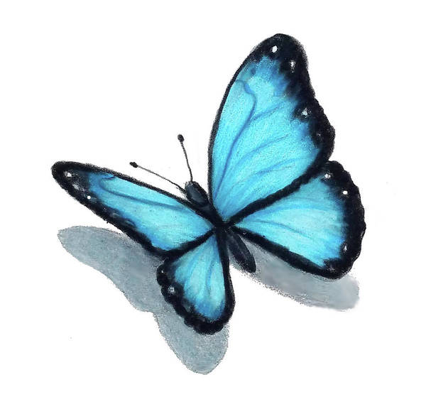 Wall Art - Drawing - Blue Butterfly by Joyce Geleynse