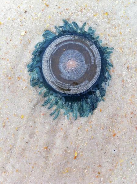 Photograph - Blue Button by Paul Rebmann