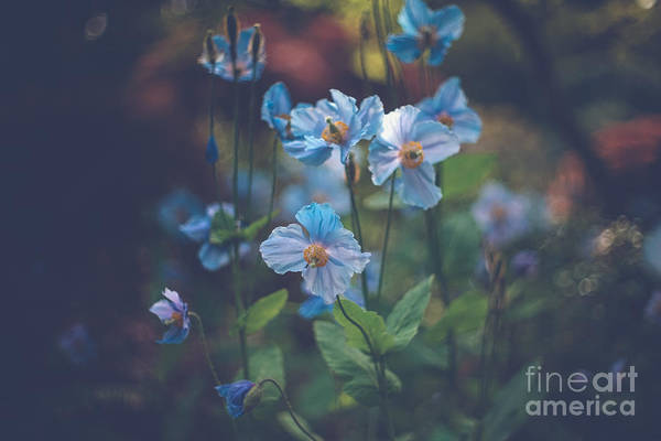 Photograph - Blue by Carrie Cole