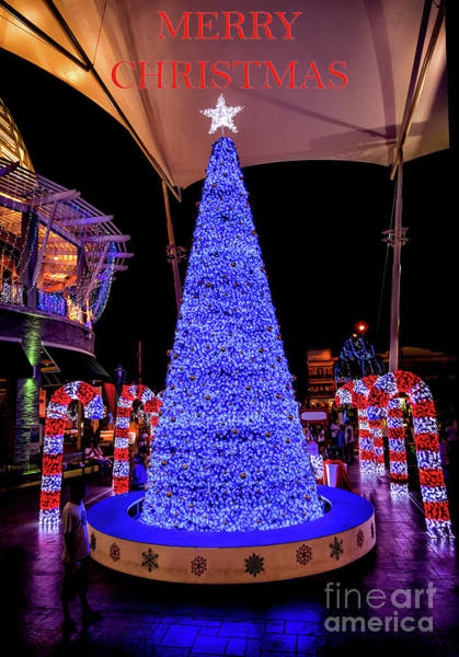 Photograph - Blue Christmas by Adrian Evans