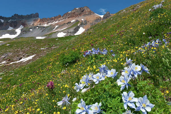 Photograph - Blue Columbine And Mountain Peaks by Cascade Colors