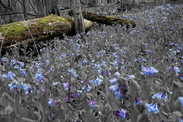 Photograph - Blue Comfort by Dylan Punke