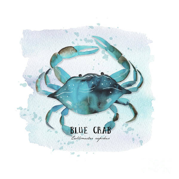 Wall Art - Digital Art - Blue Crab by Sylvia Cook