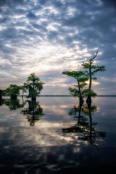 Photograph - Blue Cypress Sunrise #1 by Ghostwinds Photography