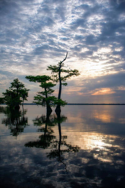 Photograph - Blue Cypress Sunrise #2 by Ghostwinds Photography