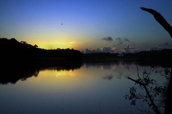 Photograph - Blue Dawn At Dirickson Creek by Bill Swartwout Photography