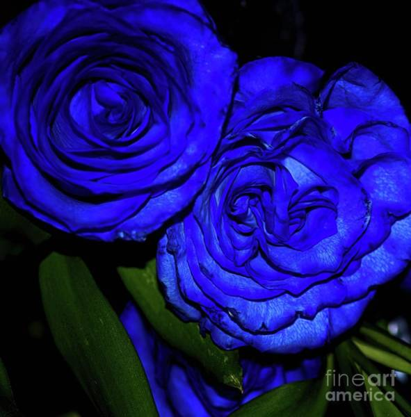 Photograph - Blue by Diana Mary Sharpton