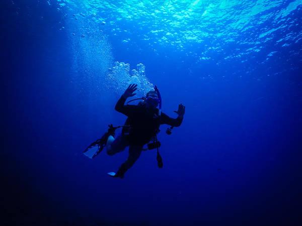 Photograph - Blue Diver by Michael Scott