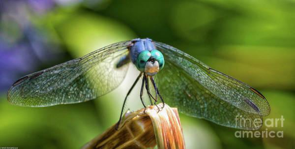 Blue Dragonfly Photograph - Blue Dragon  by Mitch Shindelbower