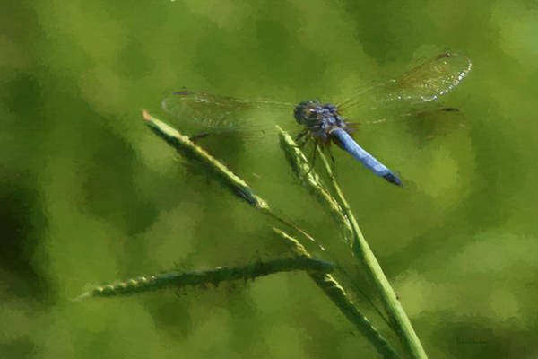Painting - Blue Dragonfly - Painting by Ericamaxine Price