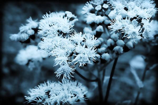 Photograph - Blue Dreams by Milena Ilieva