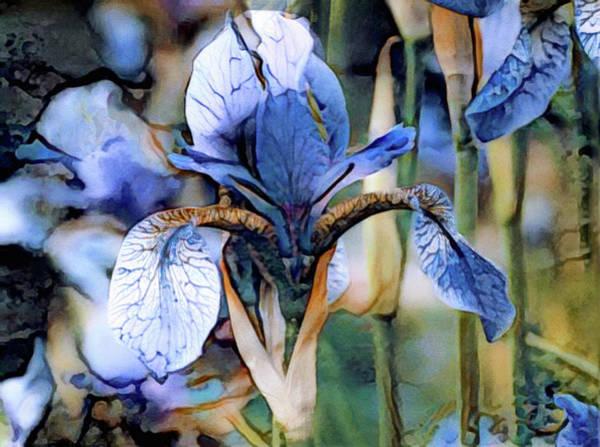 Photograph - Blue Dutch Iris by Susan Maxwell Schmidt