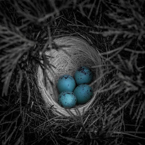 Wall Art - Photograph - Blue Eggs Selective Color by Paul Freidlund