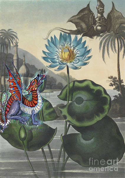 Wall Art - Painting - Blue Egyptian Water Lily With Dragons Robert Thornton by Genevieve Esson