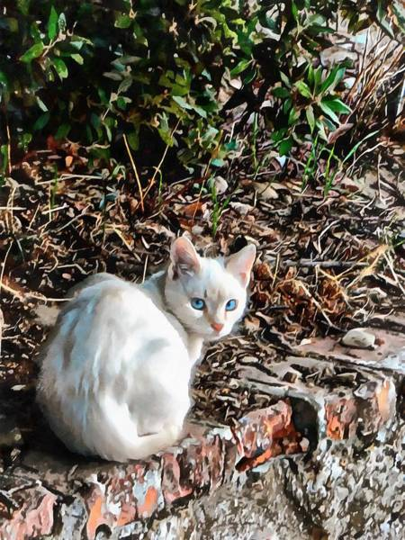Photograph - Blue Eyed Bob by Dorothy Berry-Lound