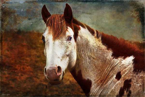 Photograph - Blue-eyed Horse by Anna Louise