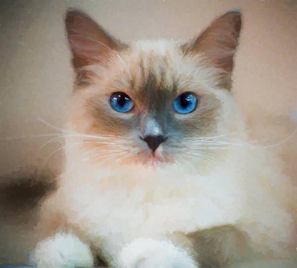 Painting - Blue-eyed Ragdoll - Painting by Ericamaxine Price