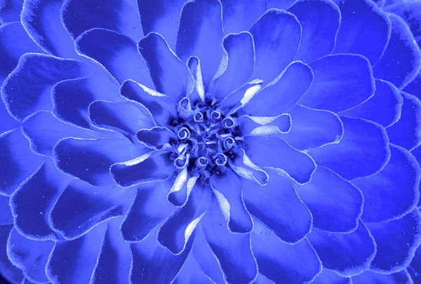 Botanic Photograph - Blue Fan by Sean Davey