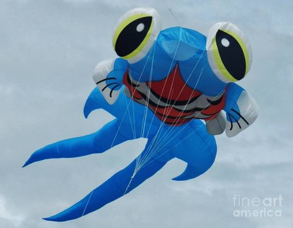 Flying A Kite Photograph - Blue Fish 2 by Snapshot Studio