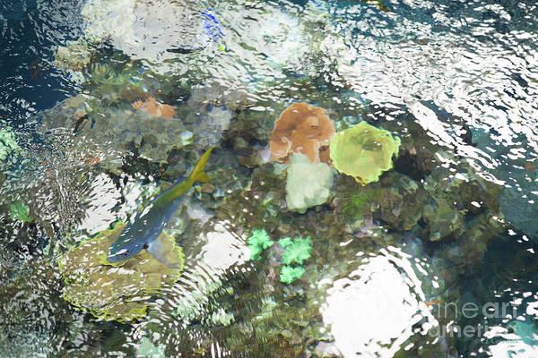 Photograph - Blue Fish by Carol Lynn Coronios