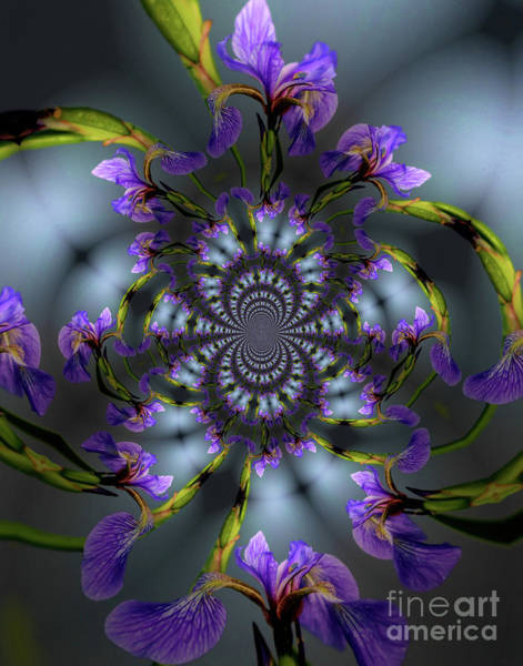 Photograph - Blue Flag Iris Flower Abstract by Smilin Eyes  Treasures
