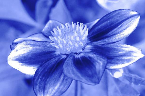 Wall Art - Photograph - Blue Flower by Sean Davey