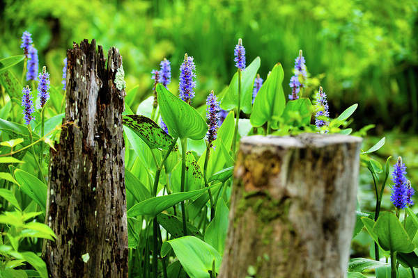 Photograph - Blue Flowers And Artistic Logs by Dennis Dame