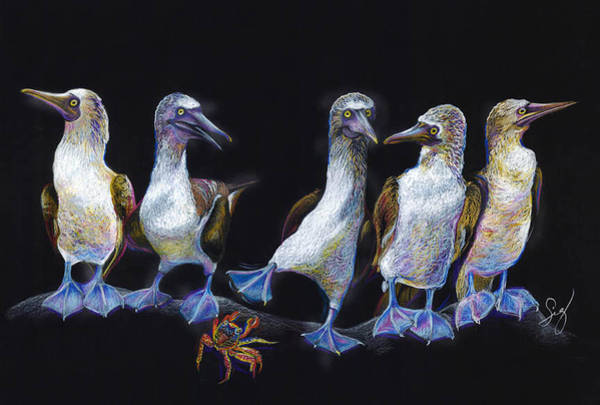Boobies Painting - Blue Footed Boobies And Crab by Sigrid Tidmore