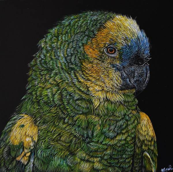 Green Parrot Drawing - Blue Fronted Amazon Parrot by Brittany Johnson