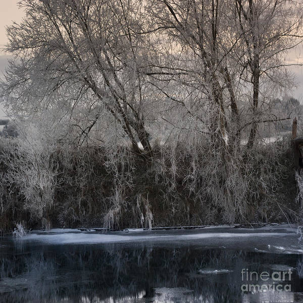Wall Art - Photograph - Blue Frozen Water by Angel Ciesniarska