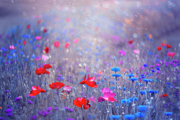 Wall Art - Photograph - Blue Garden With Poppies by Magda Bognar