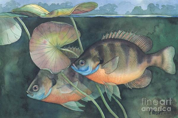 Freshwater Wall Art - Painting - Blue Gill by Paul Brent