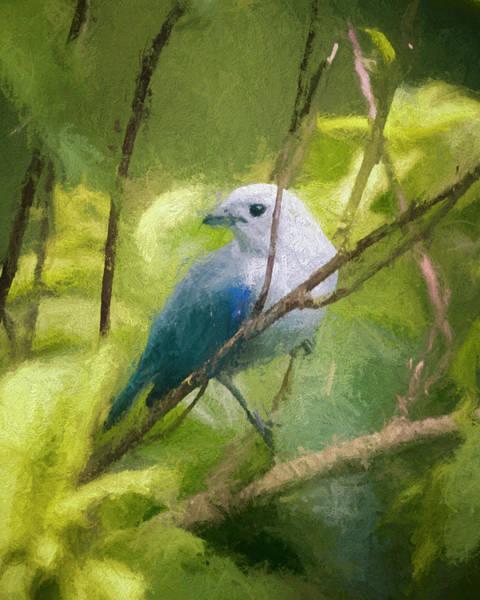 Photograph - Blue Gray Tanager Panaca Quimbaya Colombia by Adam Rainoff