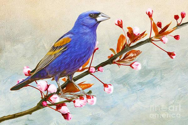 Wall Art - Photograph - Blue Grosbeak by Laura D Young