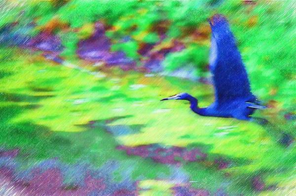 Photograph - Blue Heron In Flight by Donna Bentley