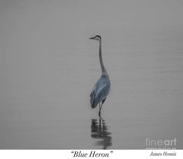 Photograph - Blue Heron by James Hennis