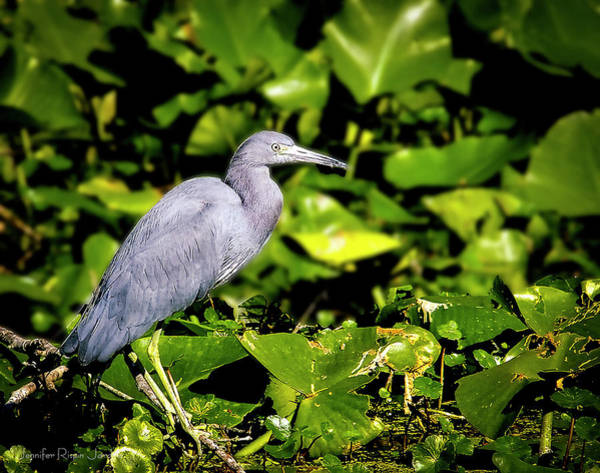 Photograph - Blue Heron by Philip Rispin