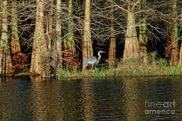 I-75 Photograph - Blue Heron by Jim Beckwith
